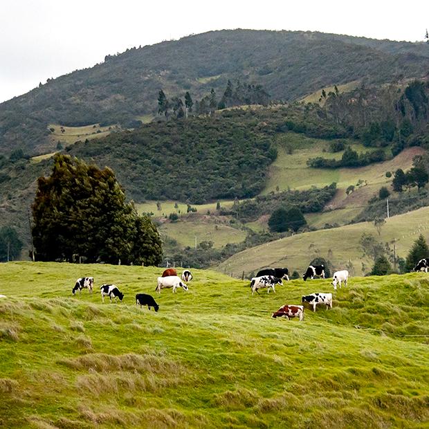 biodiversite prairie avec vaches